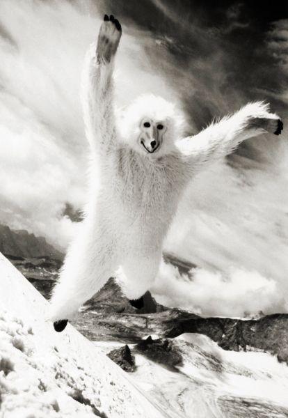 _Thomas-Stefan-starring-as-bear_%2C-Tirol-2007_790x1146.jpg